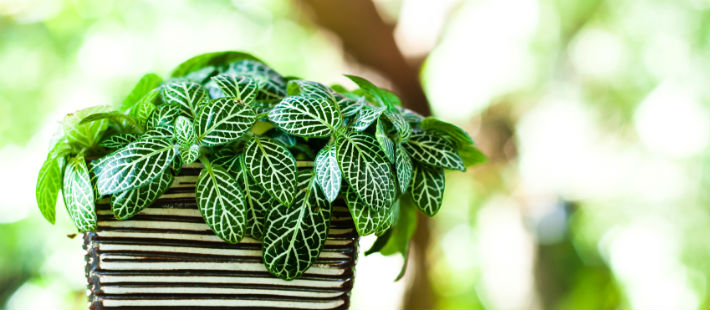 6 Air Purifying Houseplants for Improving Your Home's Indoor Air Quality