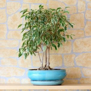 National Gardening Month: 6 Houseplants for Improving Air Quality
