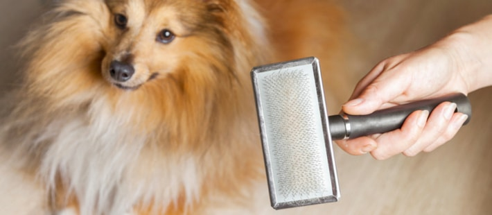 How to Reduce Effects of Pet Dander in AC System and Home