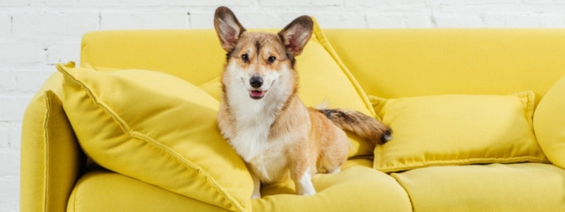 A dog sitting on a couch | Thermostat settings | A Plus Air Conditioning and Refrigeration