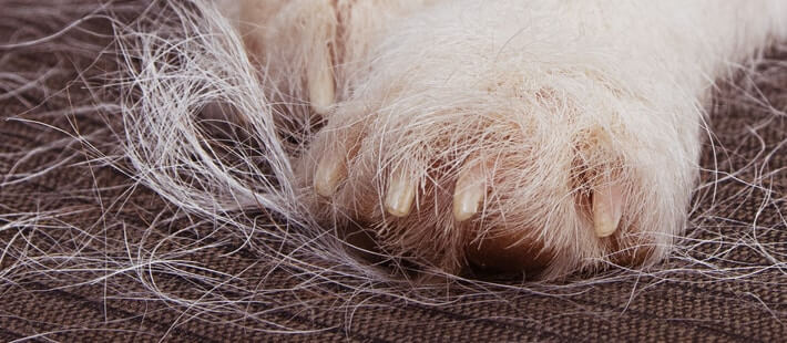 Paw of a pet with fur on the floor | Pet hair | A Plus Air Conditioning and Refrigeration